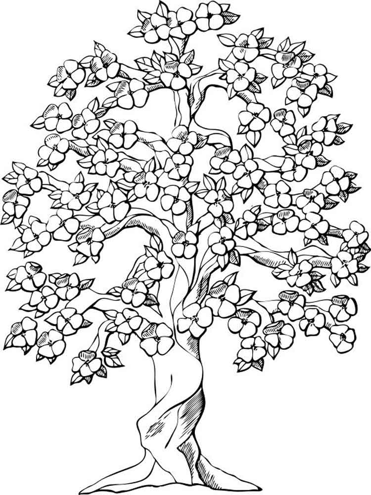 adult coloring pages tree 12