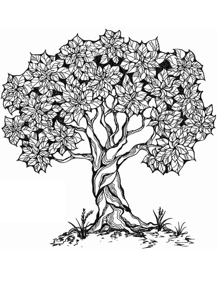 Tree coloring pages for adults. Free Printable Tree ...