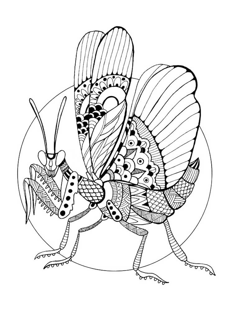 Free Insect coloring pages for Adults. Printable to ...
