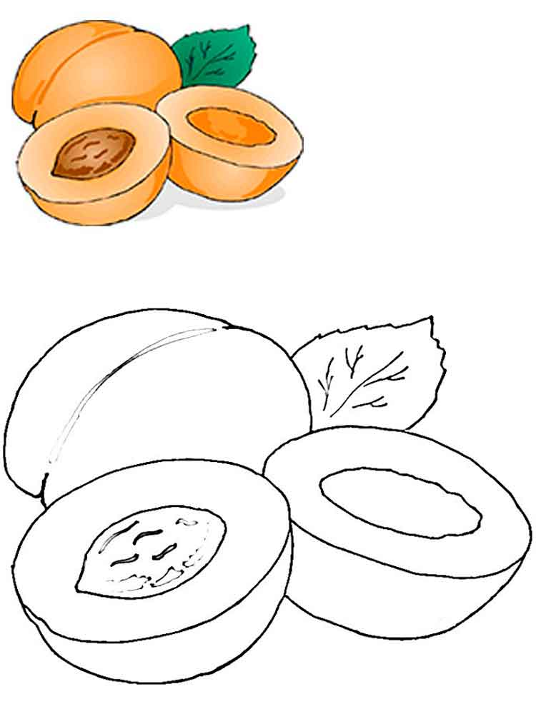 apricot fruits coloring pages 1