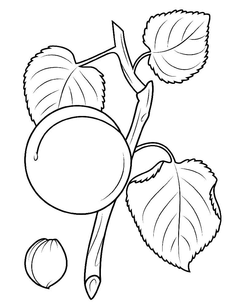 apricot fruits coloring pages 11