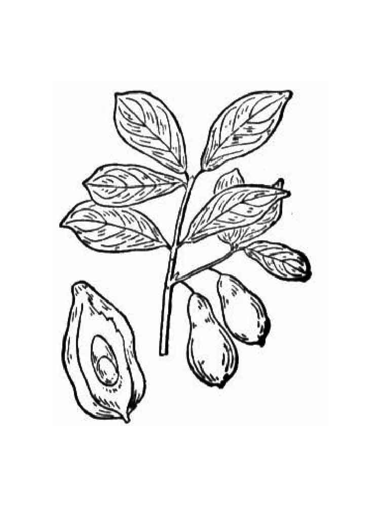 Avocado coloring pages. Download and print Avocado ...