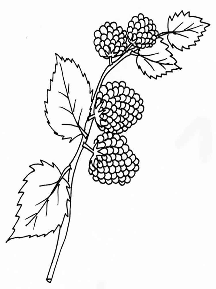 Blackberry coloring pages Download