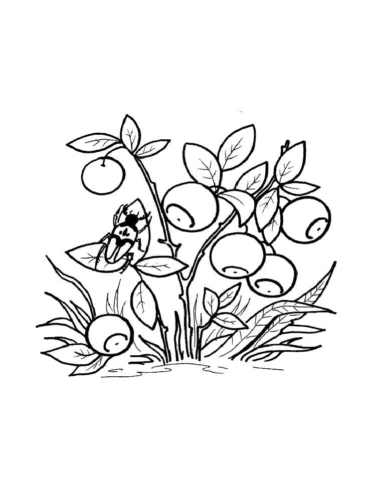 Blueberry coloring pages Download