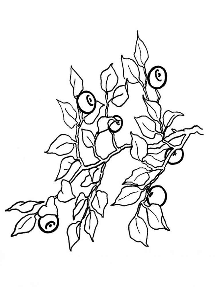 Blueberry coloring pages Download and print Blueberry