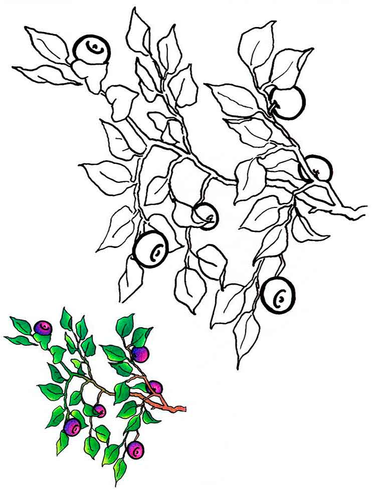 blue berry coloring pages - photo#36