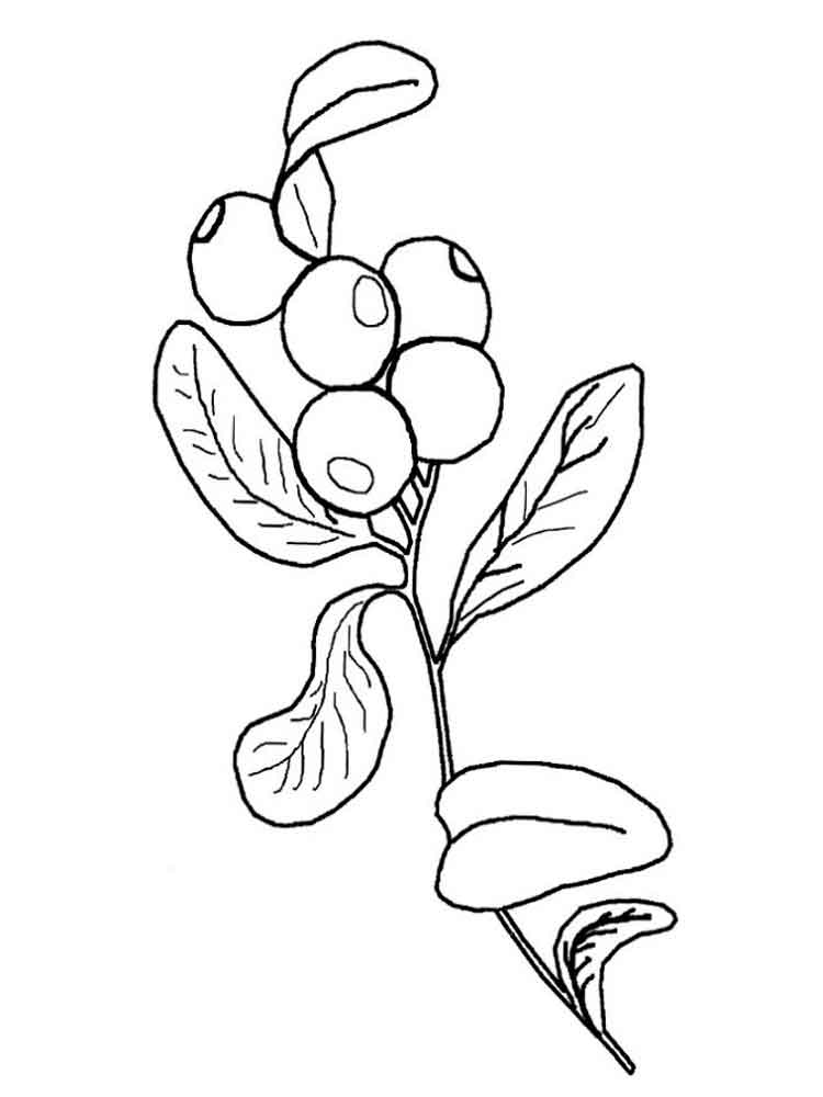 blue berry coloring pages - photo#24