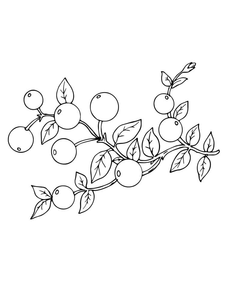 cranberry berries coloring pages 2