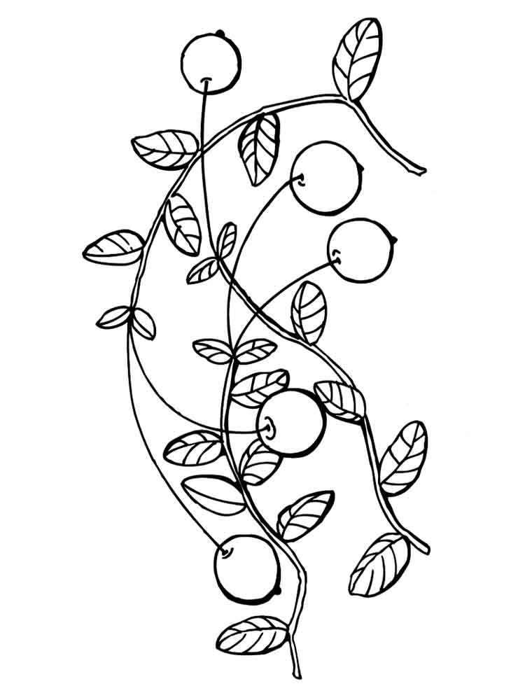 cranberry coloring pages kids - photo#4