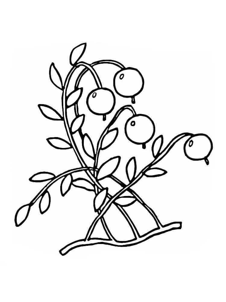 cranberry coloring pages kids - photo#2
