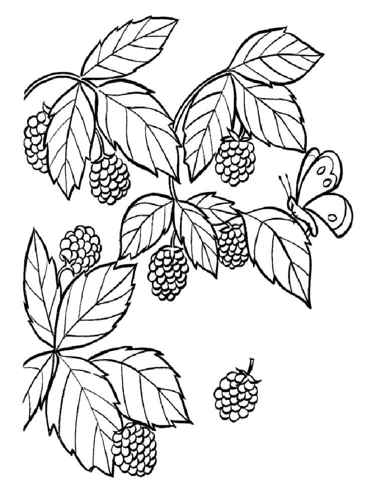 Raspberries Coloring Pages Download And Print Raspberries