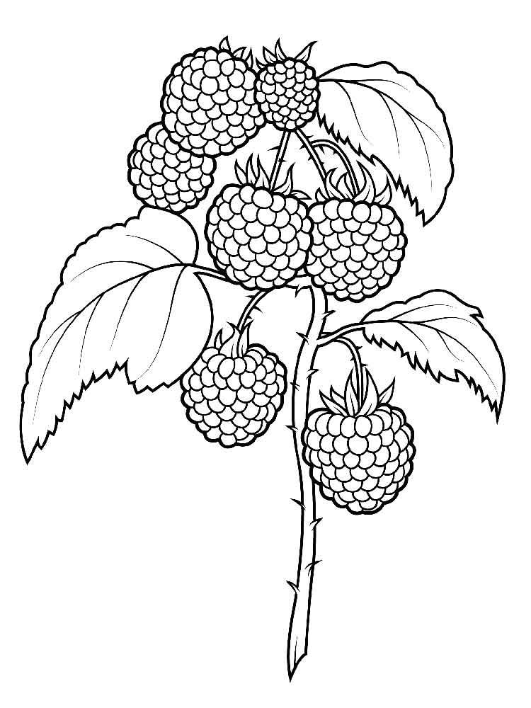 Raspberries coloring pages Download