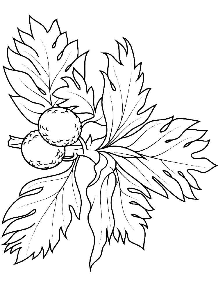 Breadfruit Coloring Pages Download And Print Breadfruit