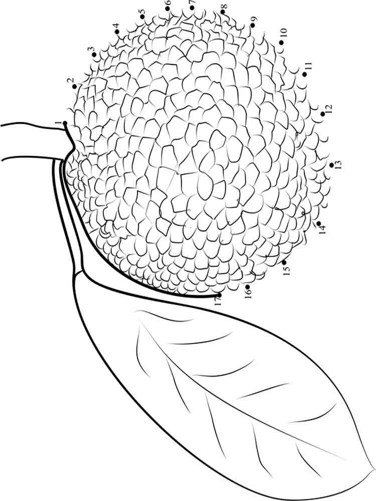 breadfruit fruits coloring pages 4