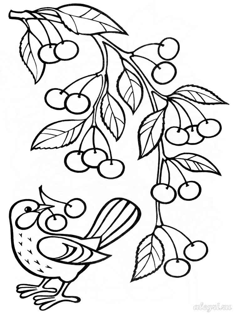 Cherry Coloring Pages Download And Print Cherry Coloring Pages