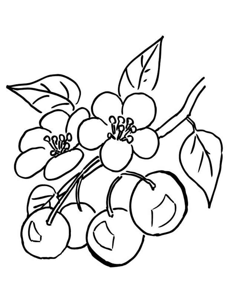 Cherry coloring pages Download