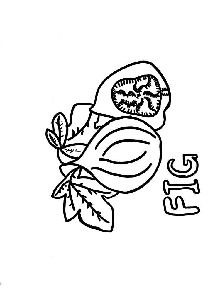 figs fruits coloring pages 1