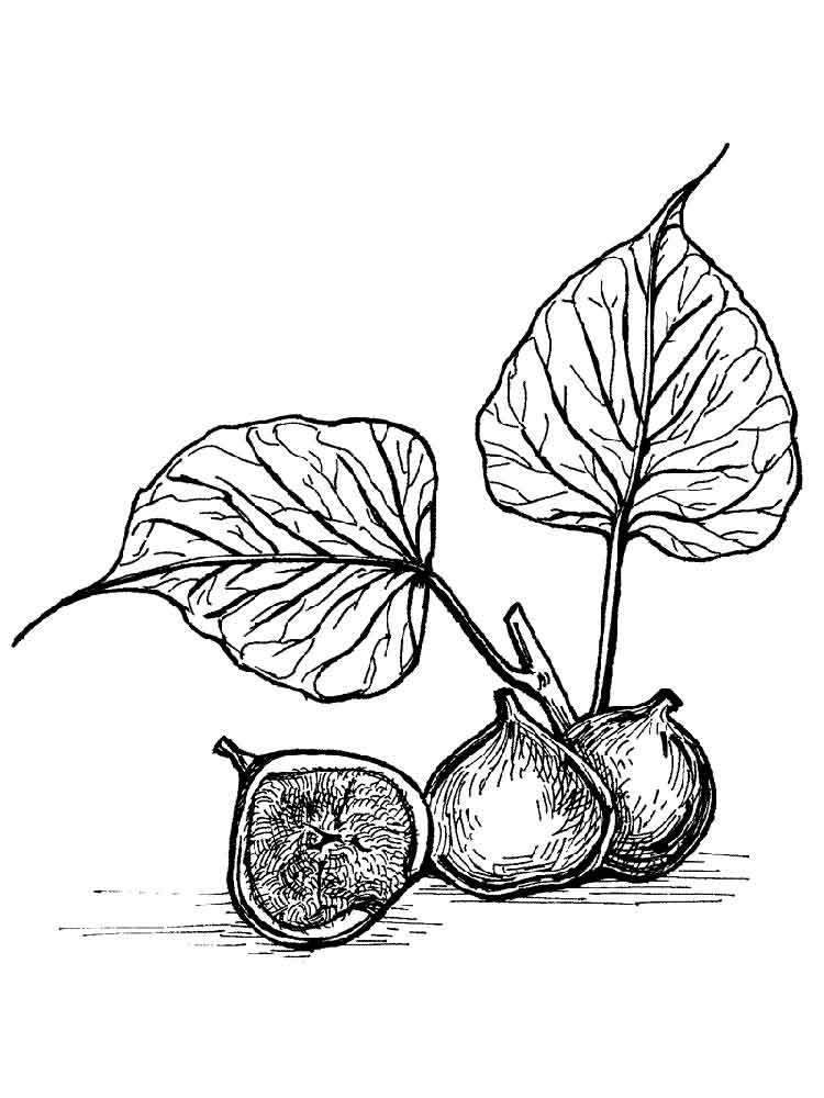 Figs Coloring Pages Download And Print Figs Coloring Pages