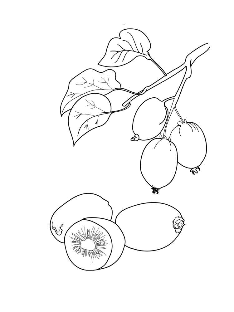 kiwi fruits coloring pages 2 - Fruit Coloring Pages 2