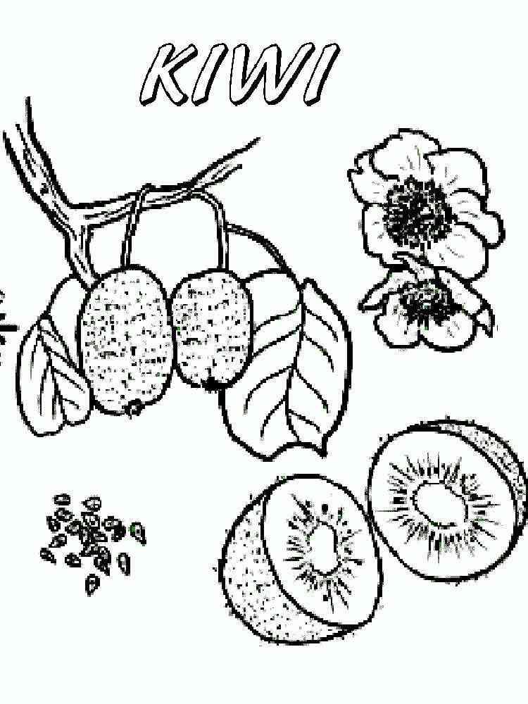 Kiwi Fruit Coloring Pages Download And Print Kiwi Fruit