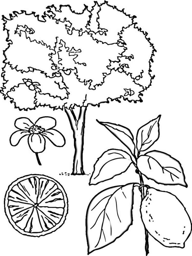 lemon fruits coloring pages 6