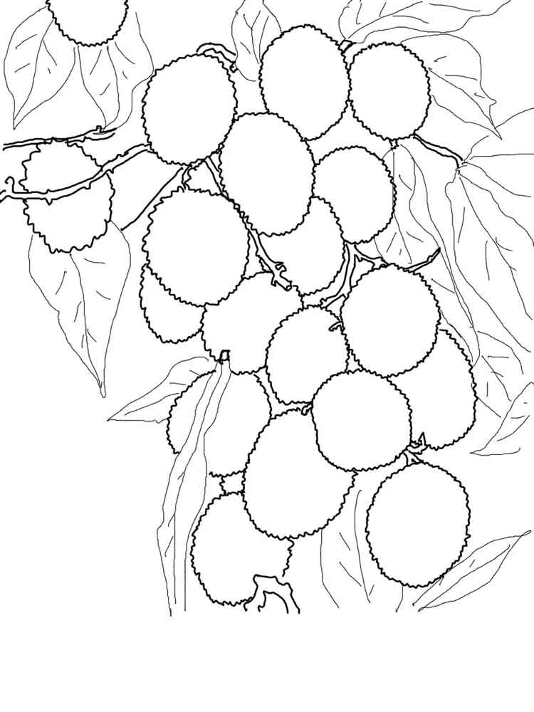 Lychee coloring pages Download