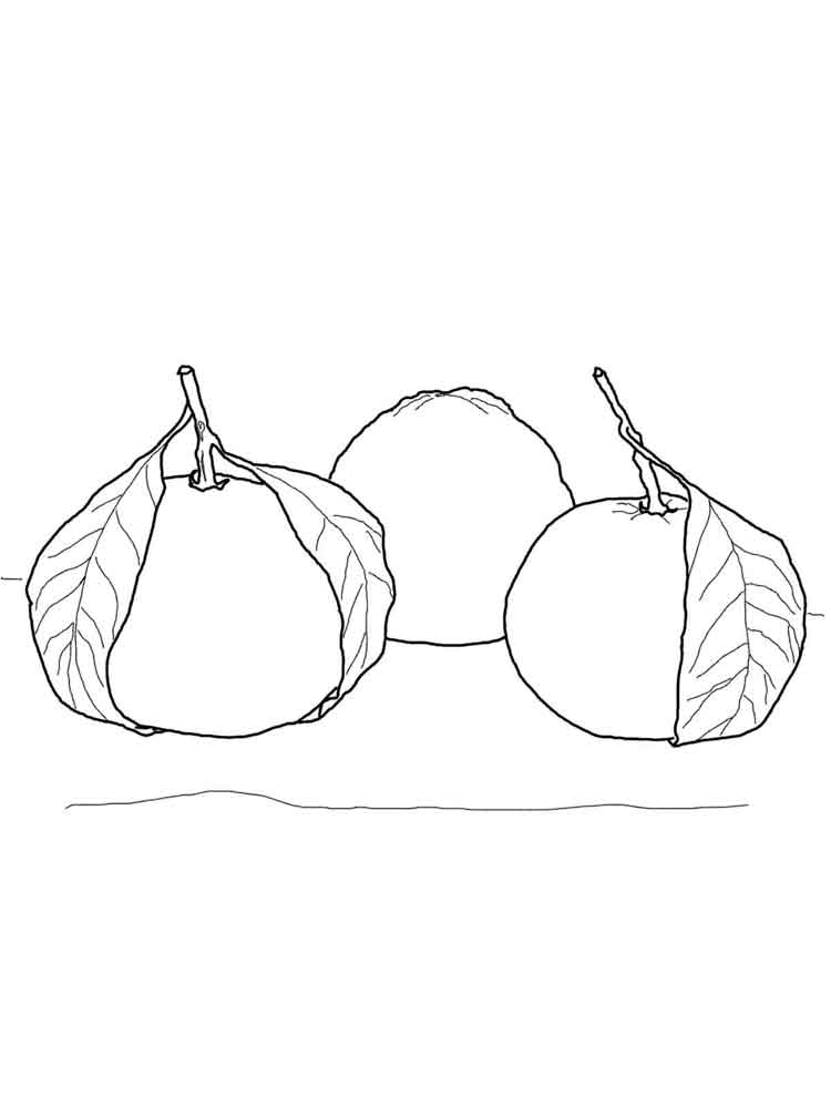 tangerine coloring pages | Mandarin(Tangerine) coloring pages. Download and print ...