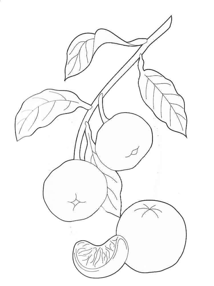 Mandarin Tangerine Coloring Pages Download And Print