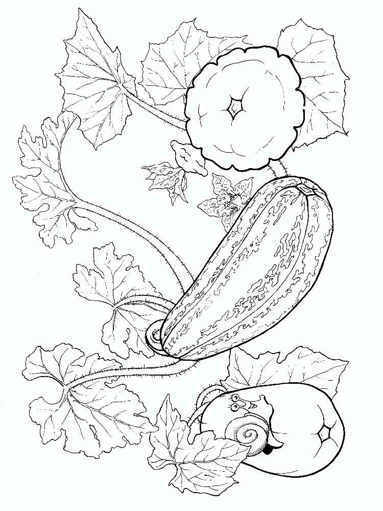 melon fruits coloring pages 2 - Fruit Coloring Pages 2