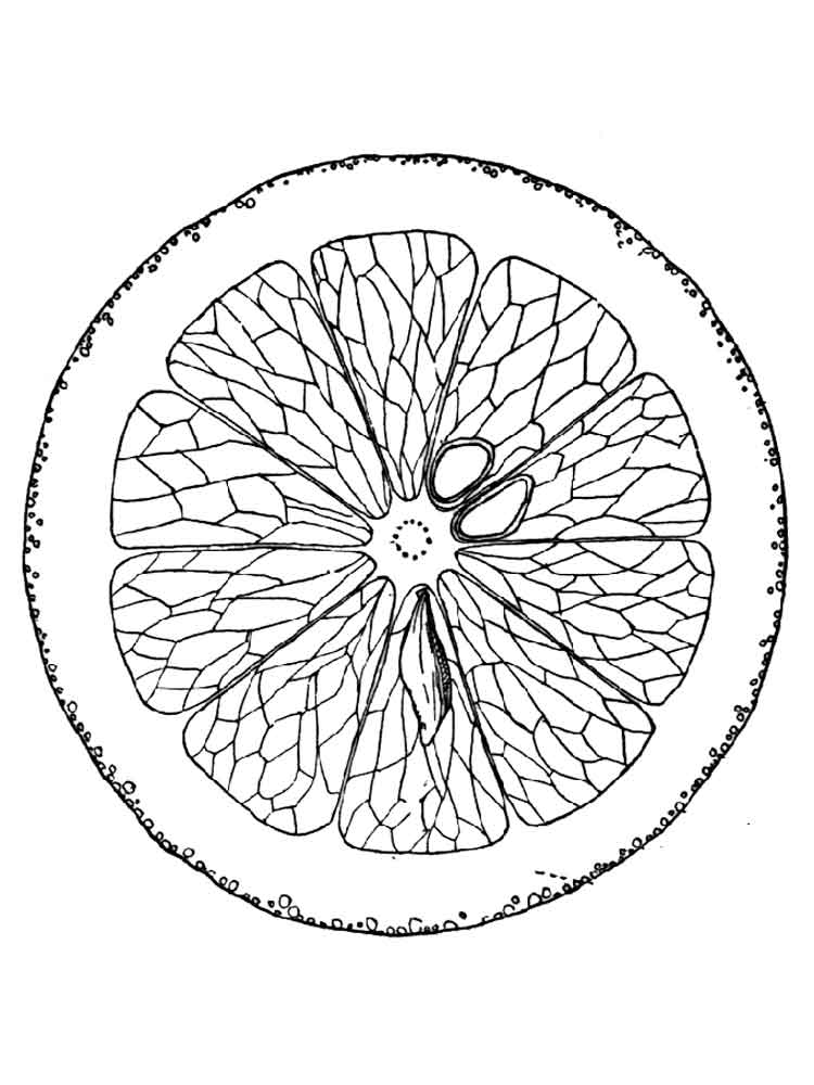 Orange Coloring Pages Download And Print Orange Coloring