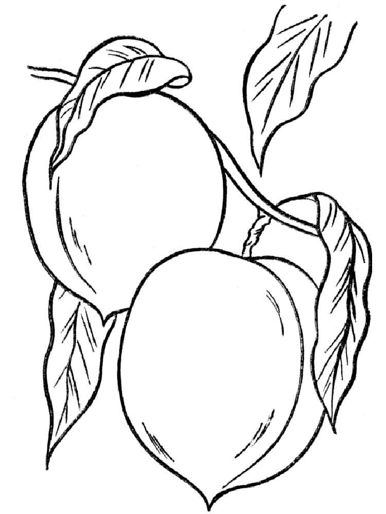 peach fruits coloring pages 1