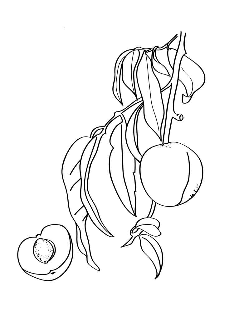 Peach Tree Coloring Coloring Pages