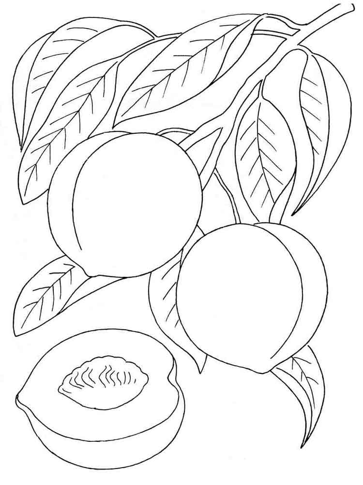 peach fruits coloring pages 2