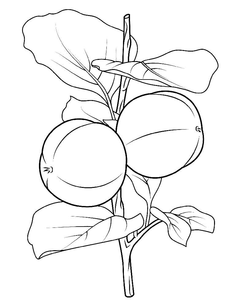 Persimmon coloring pages Download