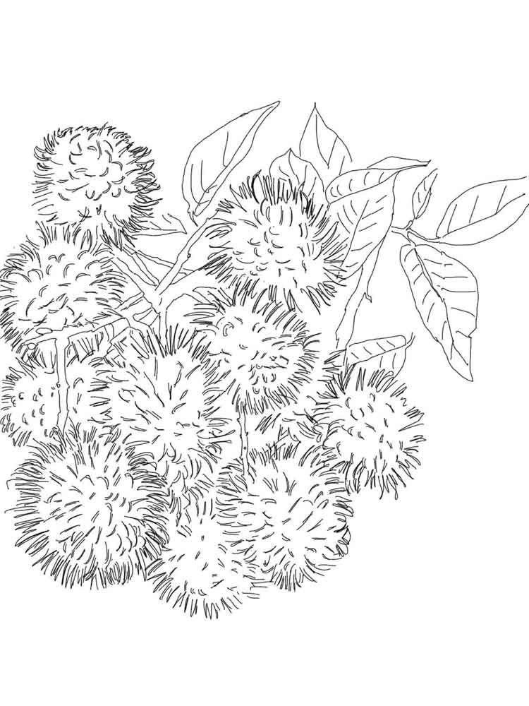 Rambutan Coloring Pages Download And Print Rambutan