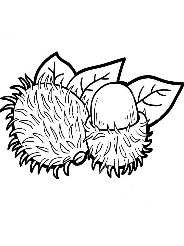 rambutan fruits coloring pages 7