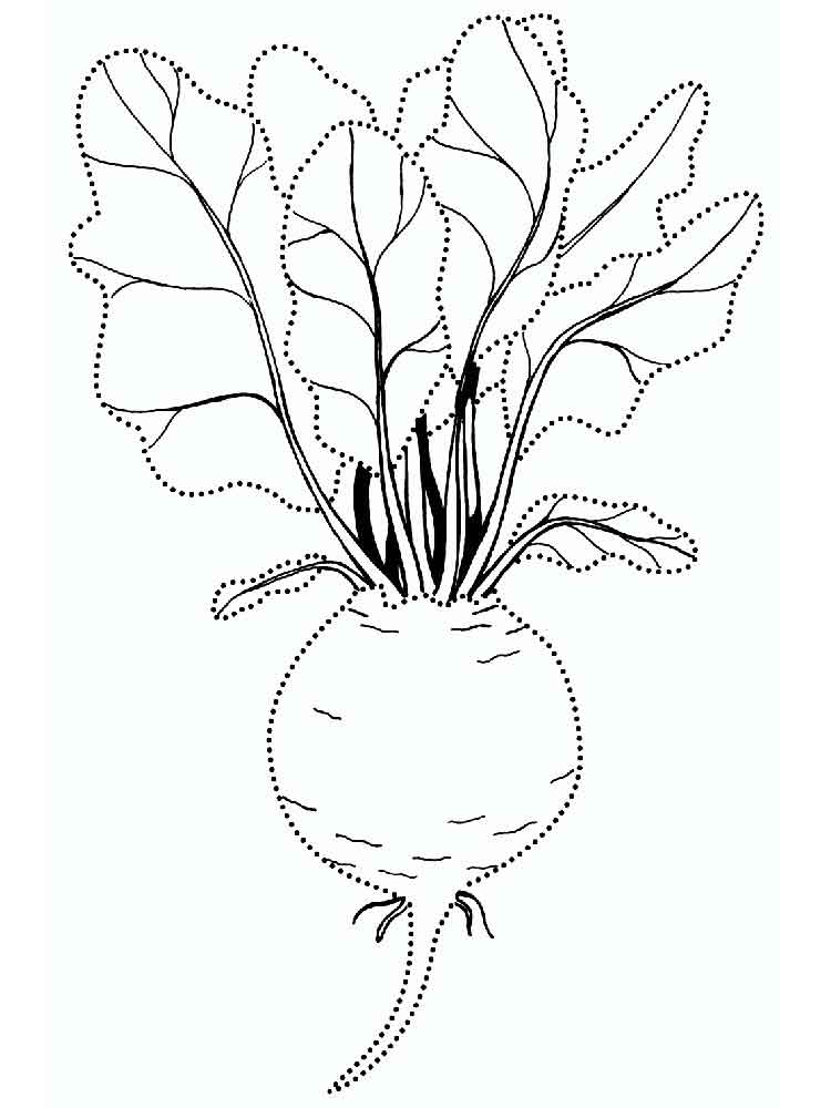Beet coloring pages Download and