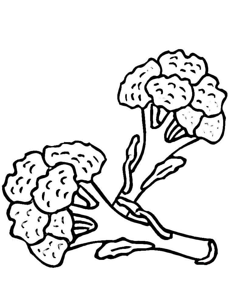 Broccoli coloring pages Download