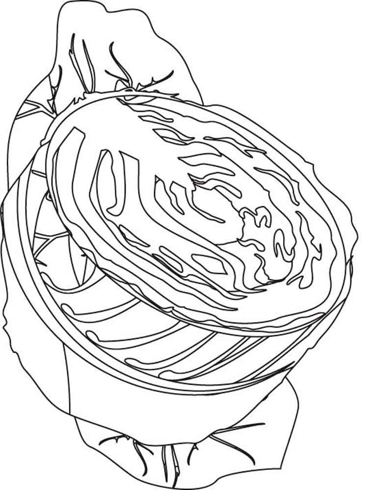 Cabbage coloring pages Download and print Cabbage