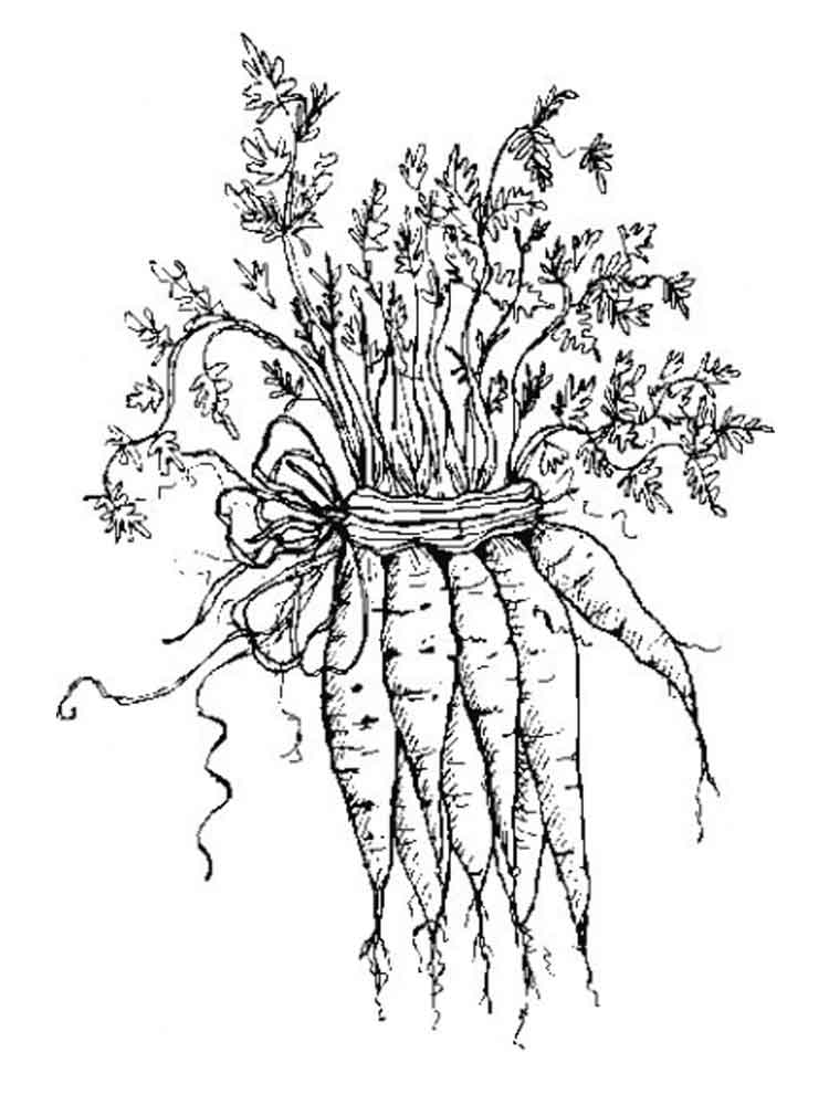 Vegetables Carrot Coloring Page 10