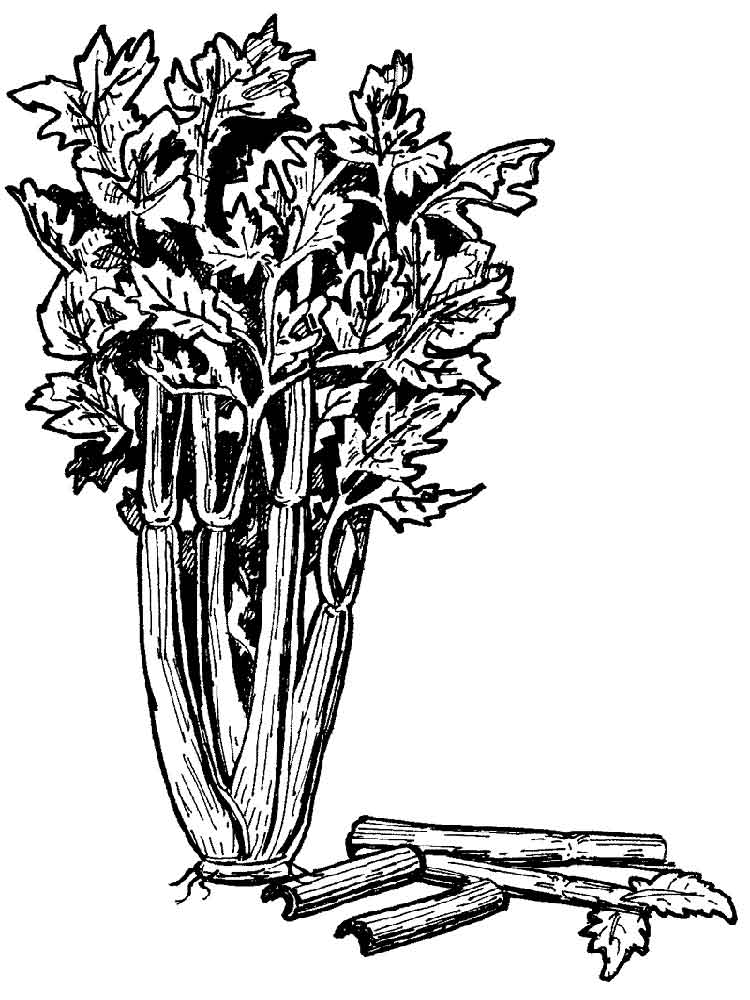 Celery coloring pages Download