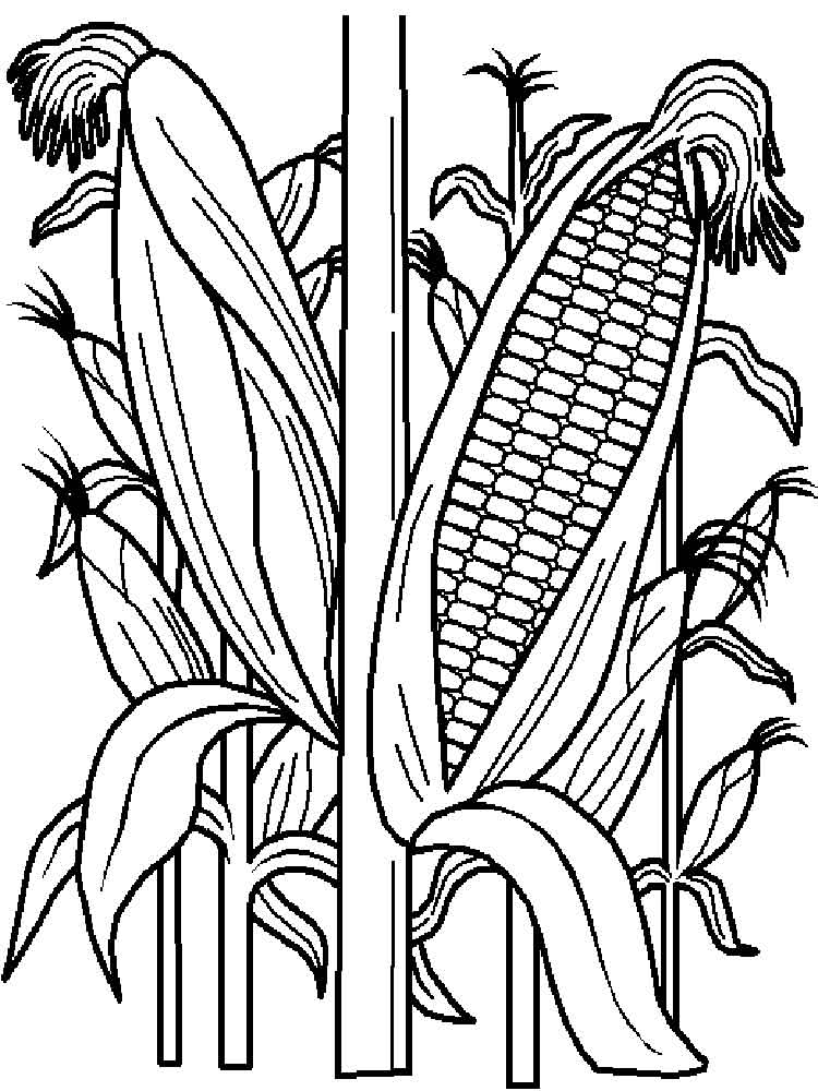 Vegetables Corn Coloring Page 10