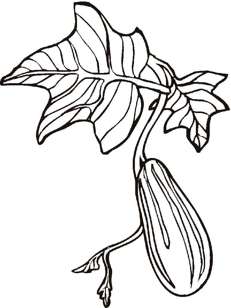 Cucumber Coloring Pages Download And Print Cucumber