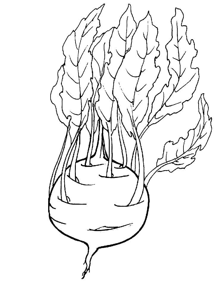 vegetables coloring pages kohlrabi coloring pages and print kohlrabi 3183