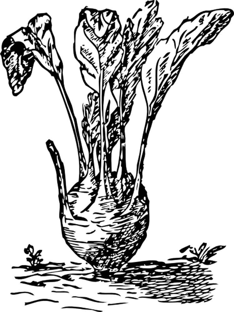 Kohlrabi coloring pages Download