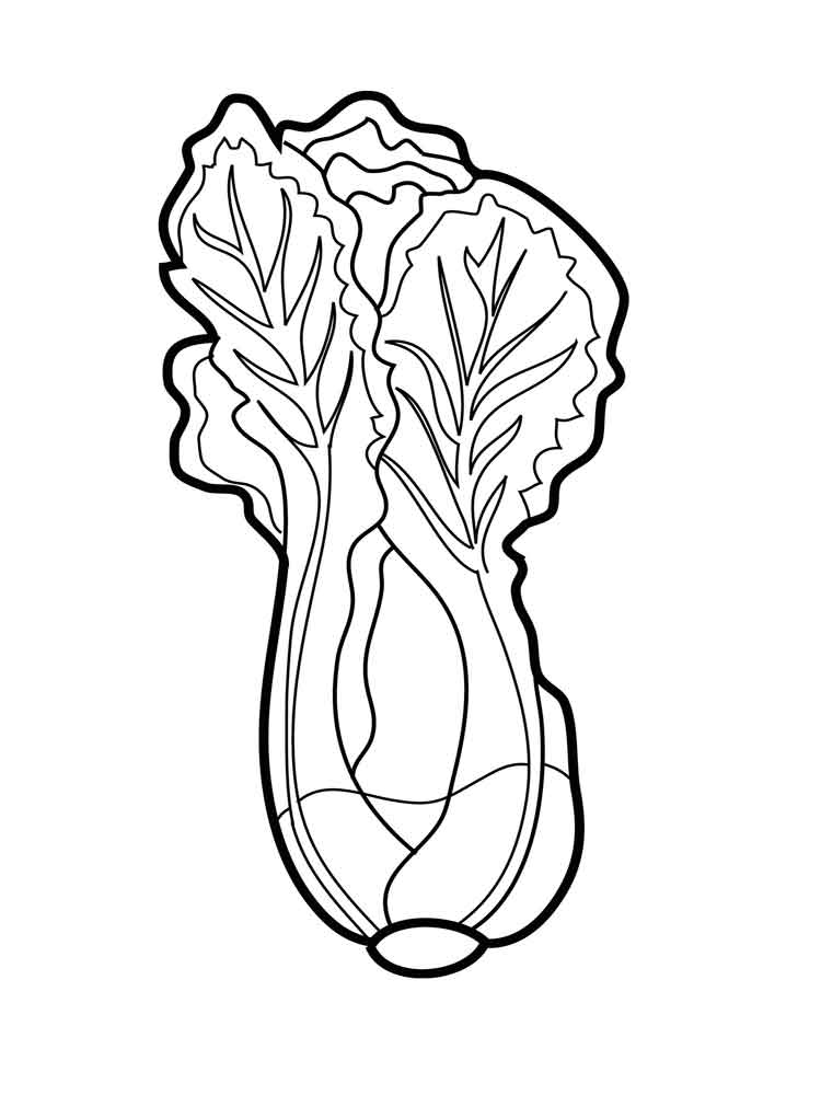 Lettuce coloring pages Download