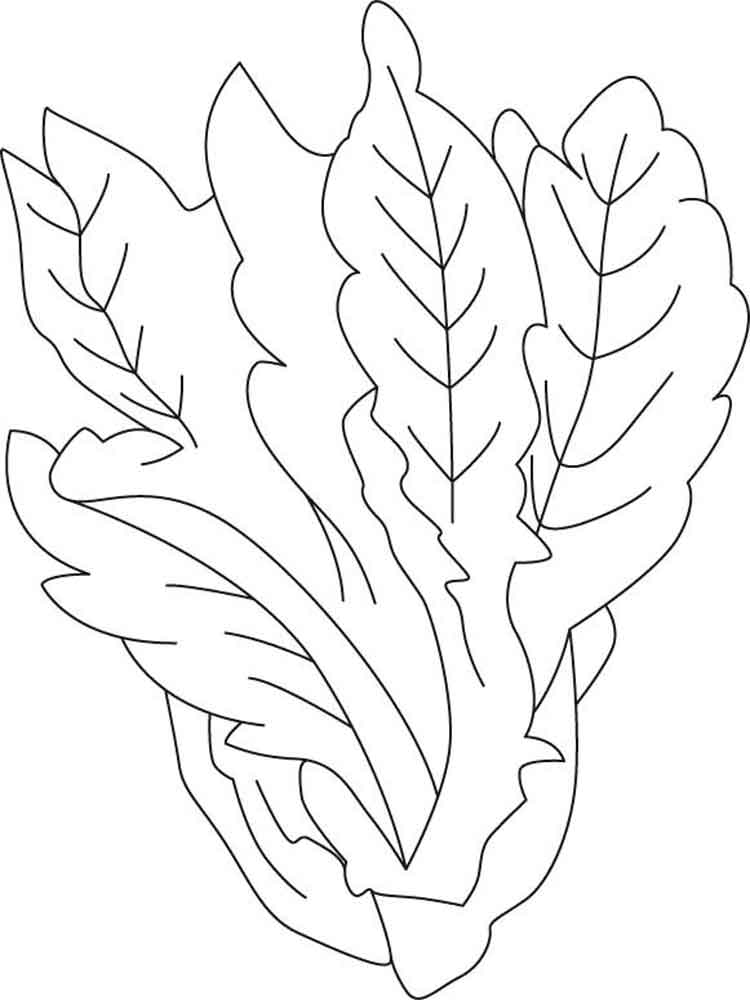 Vegetables Lettuce Coloring Page 5