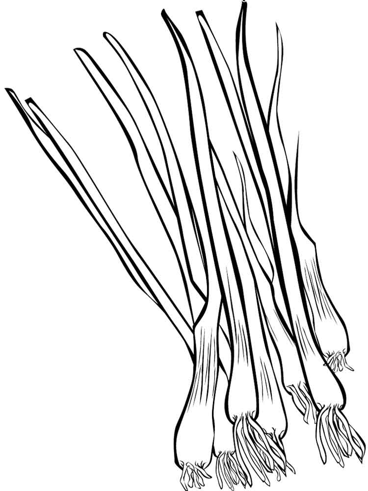 Vegetables Onion Coloring Page 11