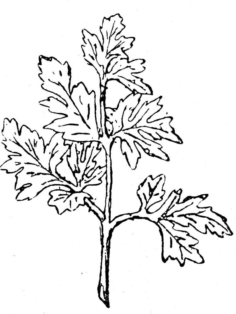 Parsley Coloring Pages Print
