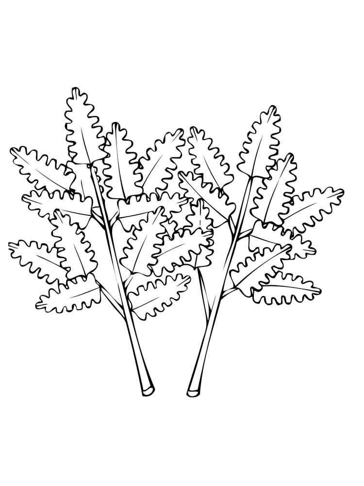 Parsley coloring pages Download